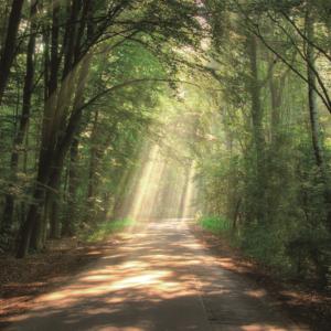 Foto op glas 'Forest'