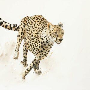 Vanessa Lomas schilderij 'Focused Cheeta' is een olieverf schilderij van een rennende Cheeta.