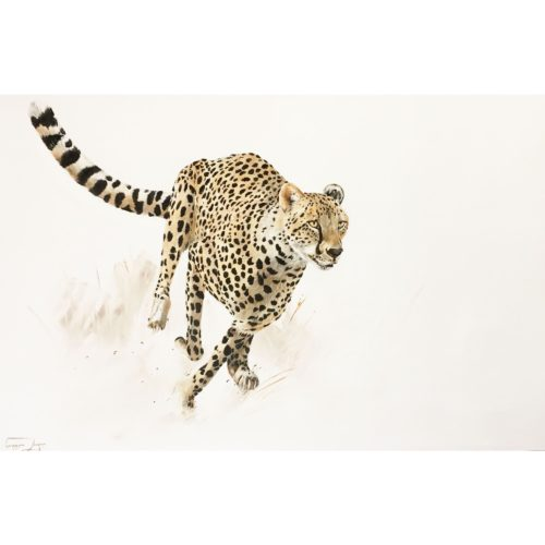 Vanessa Lomas schilderij 'Focused Cheeta'