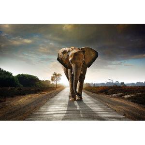 Foto op glas 'Olifant op weg'