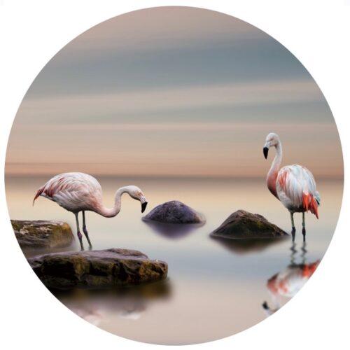 Foto op glas rond 'Flamingo'