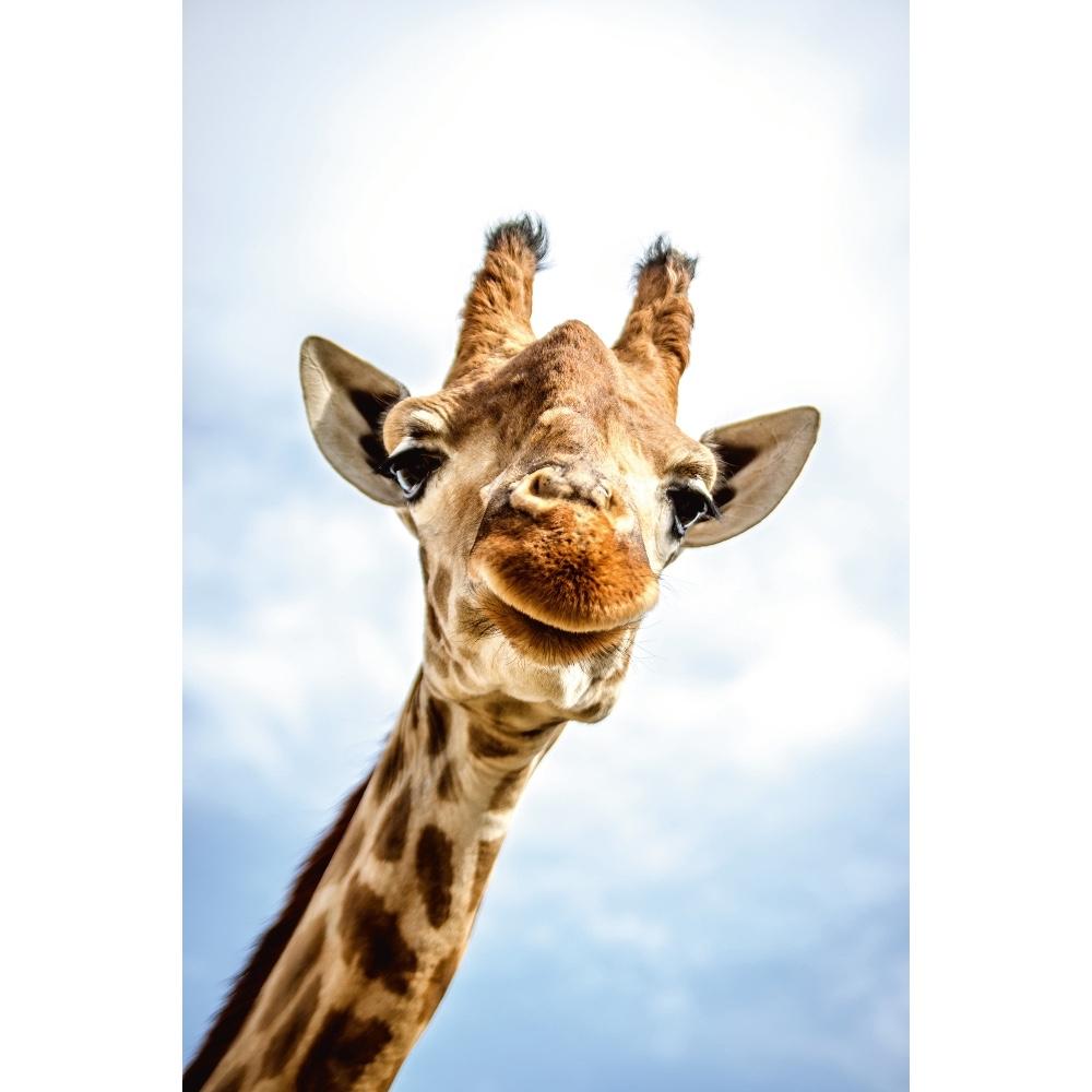 Foto op plexiglas 'Lonesome Giraffe'