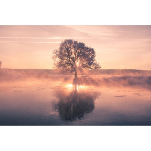 Foto op plexiglas 'Tree with reflection'