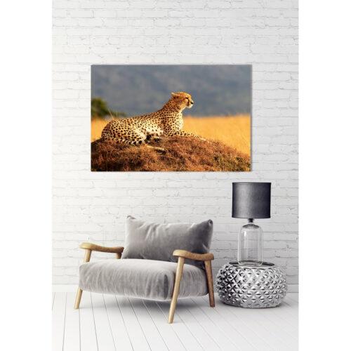 Foto op plexiglas 'Cheetah