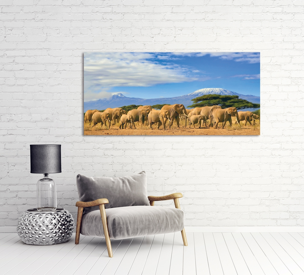Foto op plexiglas 'Elephant family in savanna'