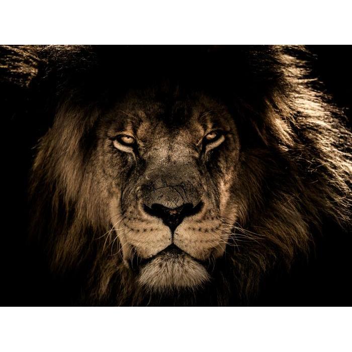 Foto op glas 'Lion'
