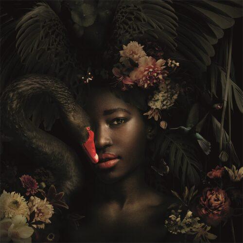 Foto op aluminium 'Beautiful black swan'