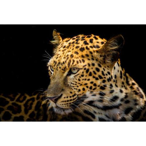 Foto op glas 'Luipaard'