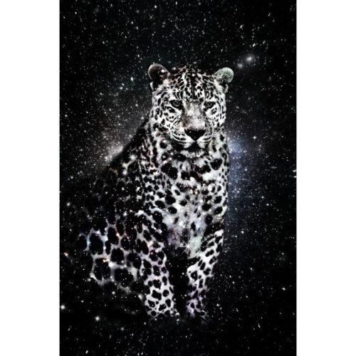 Foto op glas 'Star Leopard'