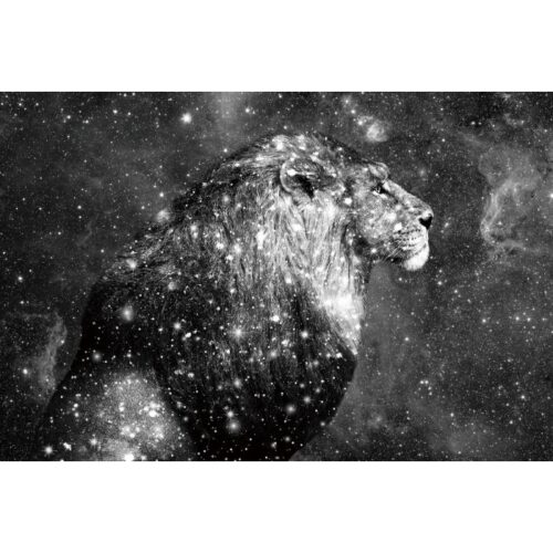 Foto op glas 'Star Lion'