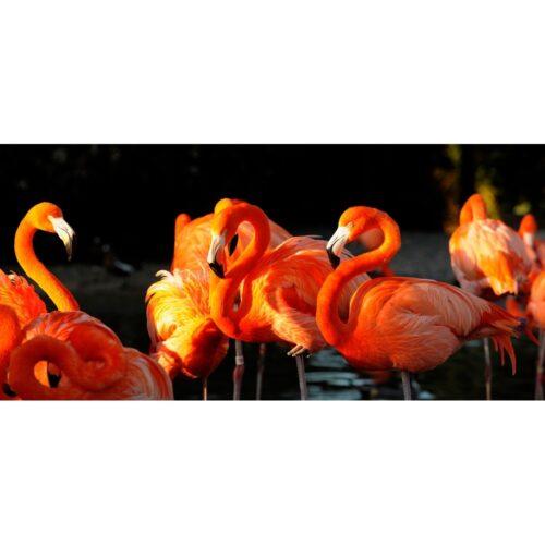 Foto op plexiglas 'Flamingo'