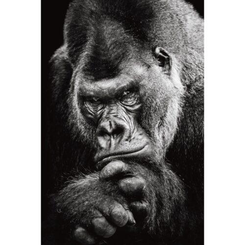 Foto op plexiglas 'Gorilla'