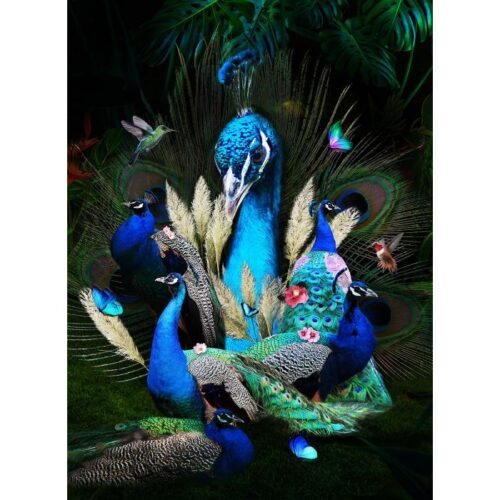Foto op glas 'Peacock Family'