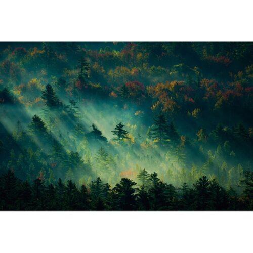 Foto op glas 'Mystic forest'